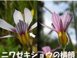 08_0609_niwazekisho07.jpg