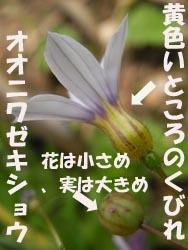 08_0609_niwazekisho08.jpg