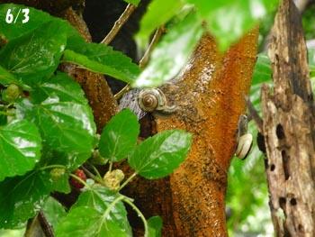 08_0622_snails.jpg