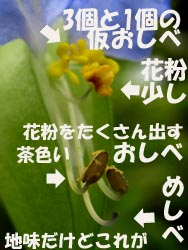 08_0705_tuyukusa02.jpg