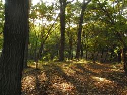 08_1109_forest.jpg