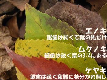 08_1117_nireka4.jpg