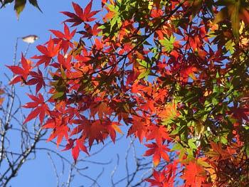 08_1202_iroha_kaede2.jpg