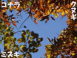 08_1204_zokibayasi2.jpg