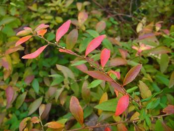 08_1205_yukiyanagi2.jpg