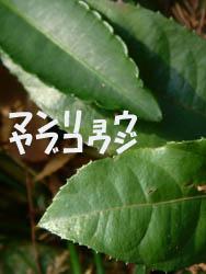 08_1211_man_yabu.jpg