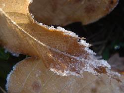08_1216_frost02.jpg