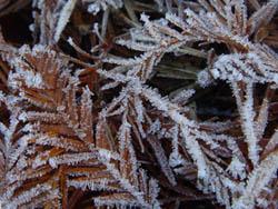 08_1216_frost05.jpg