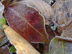 08_1216_frost07.jpg