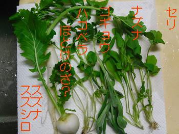 09_0107_nanakusa1.jpg
