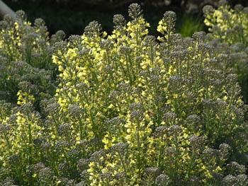 09_0331_broccoli1.jpg