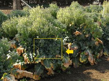 09_0331_broccoli3.jpg