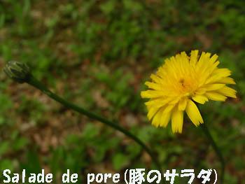 09_0504_butana2.jpg