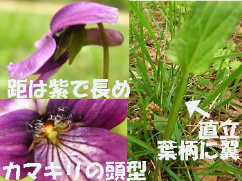09_0506_sumire2.jpg