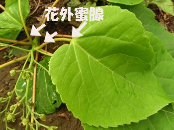 09_0522_iigiri5.jpg