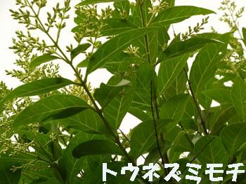 09_0602_t_nezumi_moti1.jpg