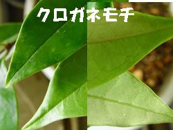 09_0609_kurogane_m2.jpg