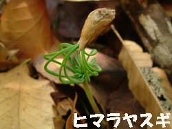 09_0615_himaraya_s.jpg