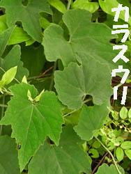 09_0713_ki_karas_uri03.jpg