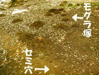 09_0821_aburazemi4.jpg