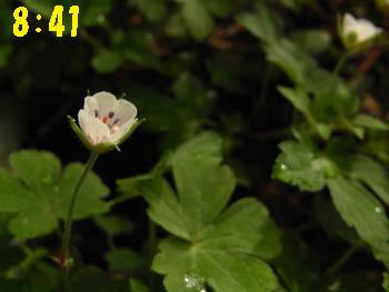 09_0824_gennoshoko02.jpg