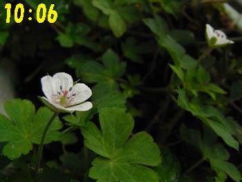 09_0824_gennoshoko05.jpg
