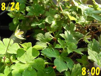 09_0824_gennoshoko15.jpg
