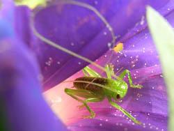 09_0825_littlebug08.jpg
