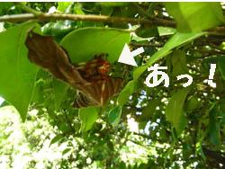 09_0920_fumei_kumo01.jpg
