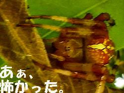 09_0920_fumei_kumo06.jpg