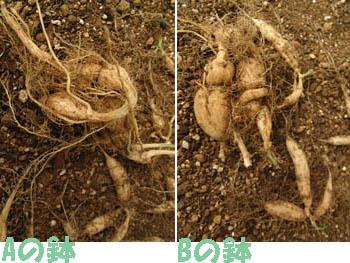 09_0923_karasu_uri2.jpg