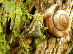 09_1002_snail.jpg