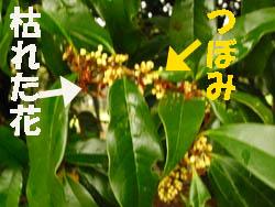 09_1008_k_mokusei2.jpg