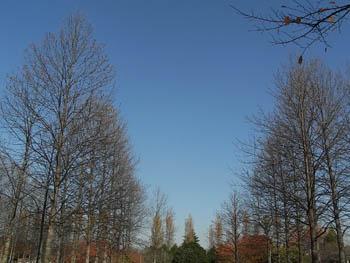 09_1127_yurinoki08.jpg