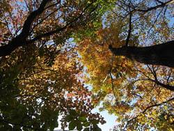 09_1129_autumnleaf01.jpg