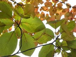 09_1129_autumnleaf03.jpg