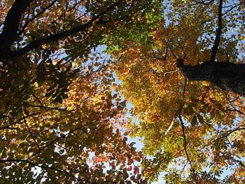 09_1129_autumnleaf05.jpg