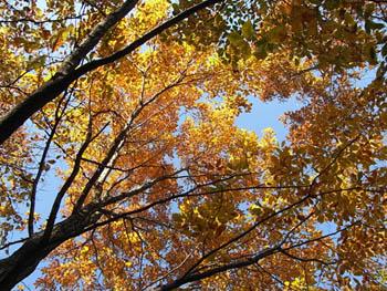 09_1129_autumnleaf06.jpg