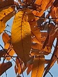 09_1129_autumnleaf07.jpg
