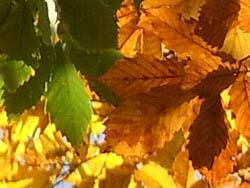 09_1129_autumnleaf08.jpg