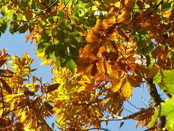 09_1129_autumnleaf09.jpg