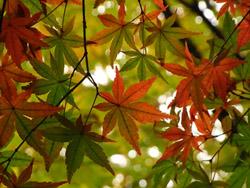 09_1130_iroha_k5.jpg