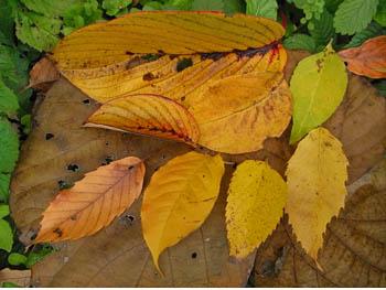 09_1207_leaves1.jpg