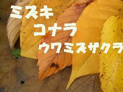09_1207_leaves2.jpg