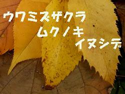 09_1207_leaves3.jpg