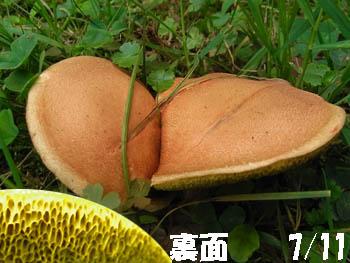 09_1228_kinoko06.jpg