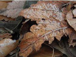 10_0115_frost1.jpg