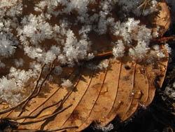 10_0204_frost2.jpg