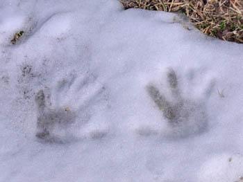10_0312_snow3.jpg