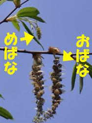 10_0411_kumaside4.jpg